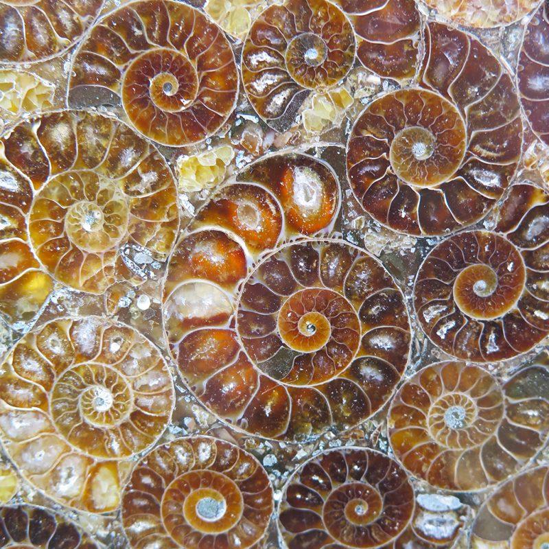 Cercle d'ammonites DZ galerie art Nice