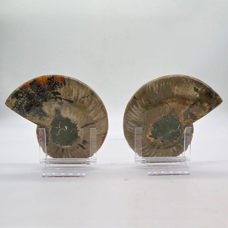 paire d'ammonites DZ Galerie art Nice dos