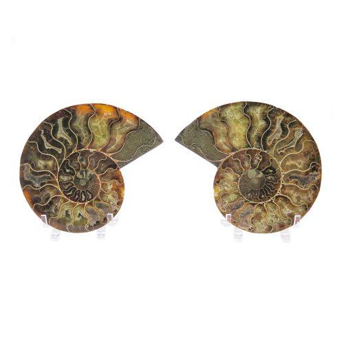 paire d'ammonites DZ Galerie art Nice