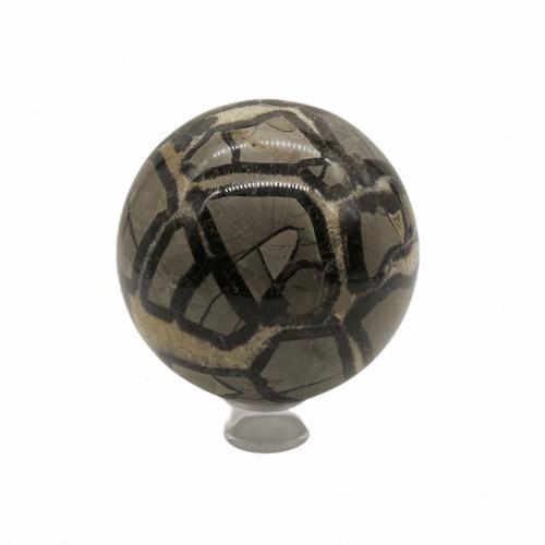 Septaria - peau de dinosaure DZ Galerie art Nice